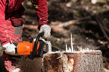 Essouchage d'arbre à Valenciennes