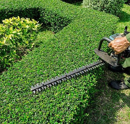 Prestations de jardinage pour professionnels